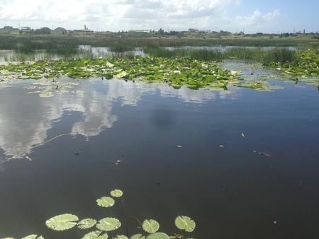 La Brea Pitch Lake, Trinidad
