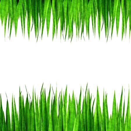 whitem: Fresh green grass photo frame