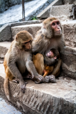 adult breastfeeding: Happy family of monkeys with amusing baby who tenderly embraces the head of the family.