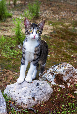 eyes wide open: Young cat stood with eyes wide open. Stock Photo