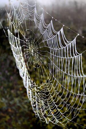 Cobweb in the misty dawn