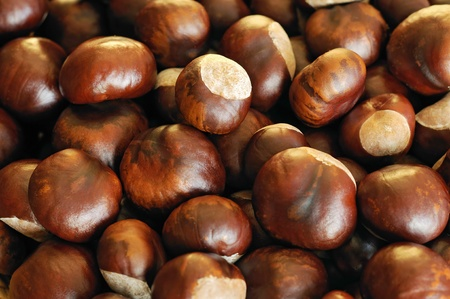 conkers: Close-up of chestnuts  Stock Photo