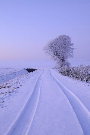 Snowy tree at dawn on the field  photo