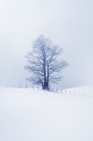 Strange and lonely tree in misty mountain, toned image.