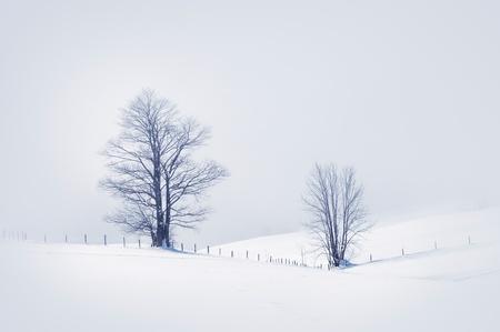 enero: Escena de invierno con dos �rboles nevados, la imagen tonos. Foto de archivo