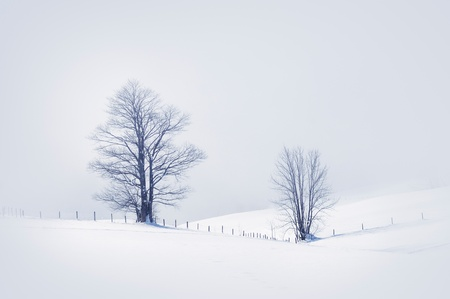 Winter scene with two snowy trees, toned image. Stock Photo