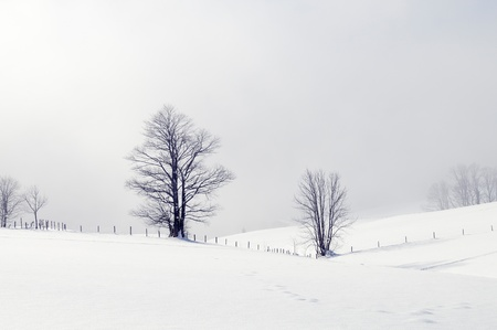 Winter scene with two snowy trees. photo