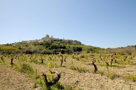 vineyard plain: The majestic medieval city of Mdina, Malta, framed by vineyards and a wonderful blue sky.