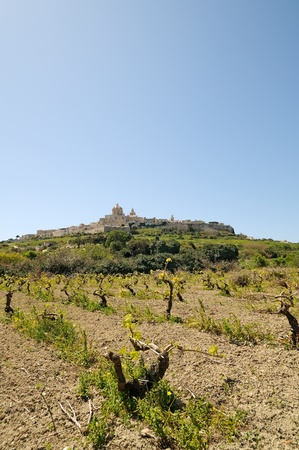 The majestic medieval city of Mdina, Malta, framed by vineyards and a wonderful blue sky.  Stock Photo - 11695862
