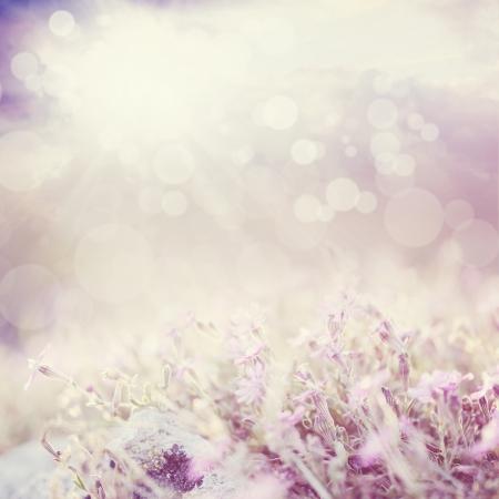 боке: Фон с цветами в красивый луг и Cloudscape с боке огни