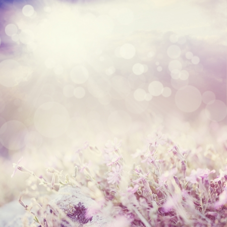 herb garden: Background with flowers in a beautiful meadow and cloudscape with bokeh lights