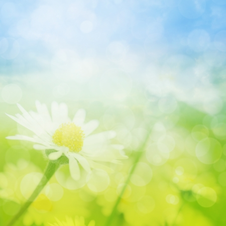 Summer field of camomile flowers with bokeh lights  photo
