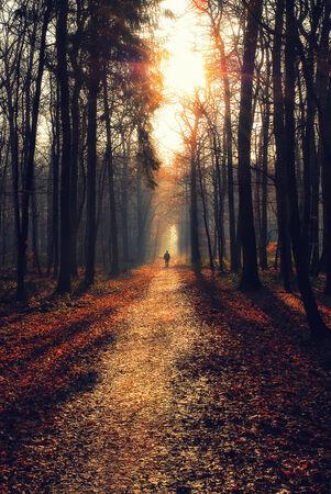 walking path: Man walking on a path in a strange dark forest