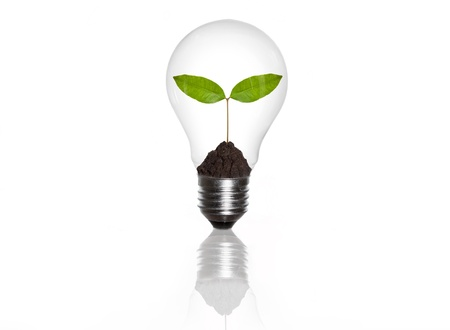green eco energy concept, plant growing inside the light bulb photo