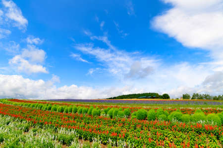 This is the Summer Landscape at Kamifurano town in Hokkaido Prefecture, Japan.