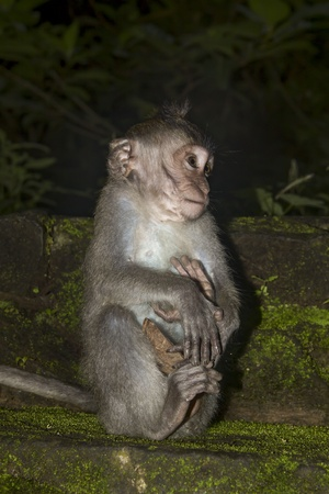 Monkey baby alone in the dark in ancient temple  Stock Photo