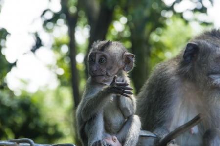 Monkey baby jesticulating Stock Photo - 16947322