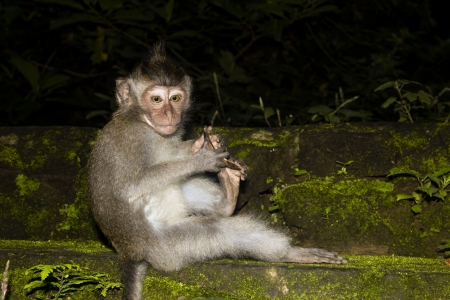 Monkey baby alone in the dark forest Stock Photo