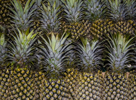 Rows of pineapples designed for sale  Phuket, Thailand