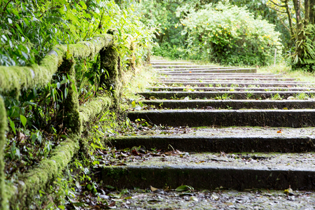 Old stone steps in tropical forest. Northern Thailand, Doi Inthanon. Stock Photo