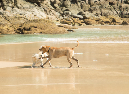Two dogs on the beach Stock Photo