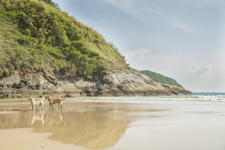 Two Dogs standing on the lonely beach
