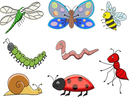 oruga: colección de dibujos de insectos Vectores