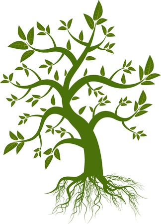 green leaf tree Stock Vector - 12542622