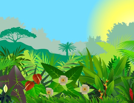 amazon rain forest: beautiful forest background