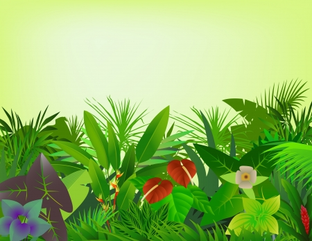 rainforest: beautiful forest background