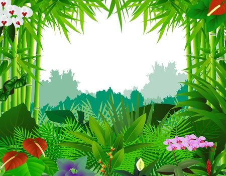 tropical border: beautiful forest background