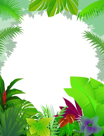 rain forest: tropical forest background