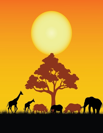 lions rock: wild animal silhouette Illustration