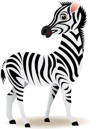 herbivore: funny zebra cartoon Illustration