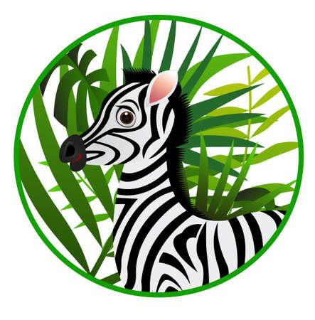 zebra heads: funny zebra cartoon Illustration