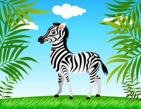 wildlife reserve: zebra in the wild