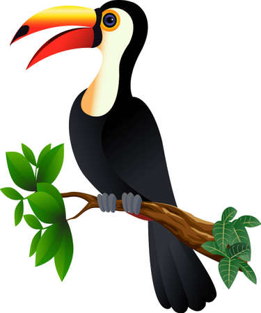 funny toucan bird Vector