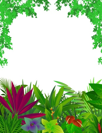 fern: beautiful forest background