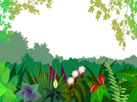 beautiful forest background Stock Vector - 12991425