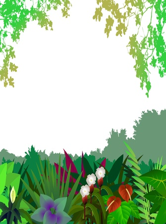 magical forest: beautiful forest background