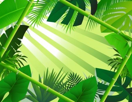 selva: de fondo hermoso bosque, con marco de bambú