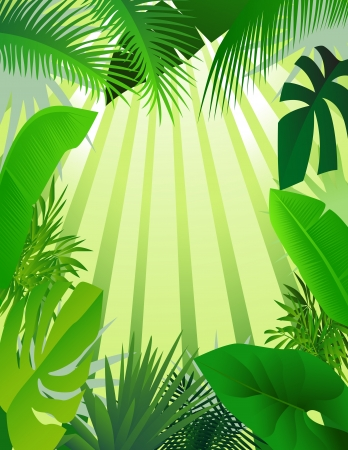 tropical frame: beautiful forest background