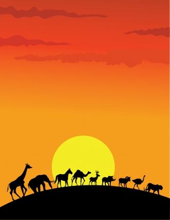 africa sunset: silhouette animali selvatici