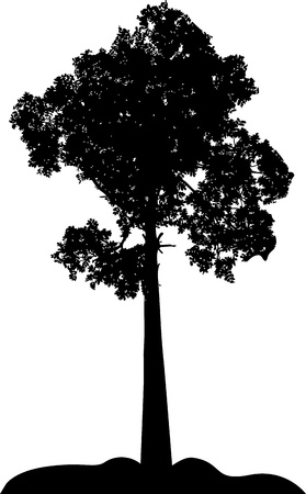 tree silhouette Stock Vector - 14288210