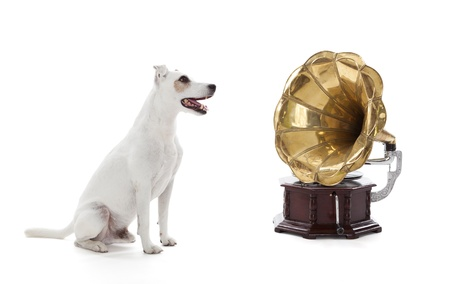 stagnate: Jack Russell Terrier sitting next to gramophone