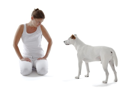 stagnate: Jack Russell Terrier looking to woman on white background Stock Photo