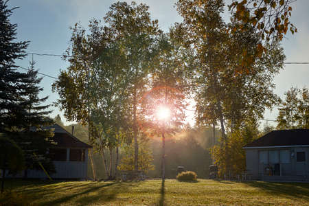 Sunny canadian morning in the forrest photo