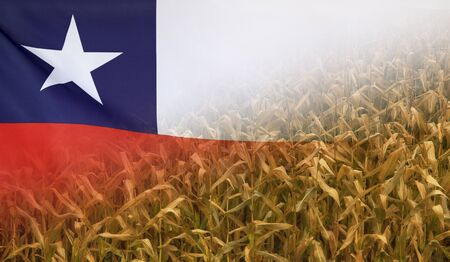 merged: Nutrition food concept corn field in sunny afternoon light merged with fabric flag of Chile