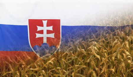 merged: Nutrition food concept corn field in sunny afternoon light merged with fabric flag of Slovakia Stock Photo