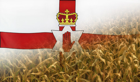 merged: Nutrition food concept corn field in sunny afternoon light merged with fabric flag of Northern Ireland Stock Photo